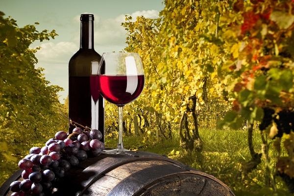 Из-за изменения климата в мире появятся новые винодельческие ...