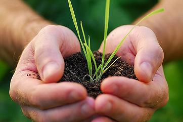 Томские аграрии с помощью бюджетных денег оздоровят землю