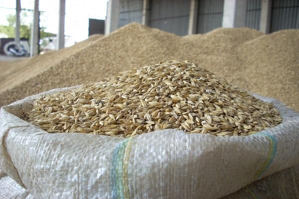 В Орловской области совершили крупнейшую кражу зерна из госфонда