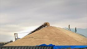 МСХ подготовил проект распределения поступлений от пошлин на зерно