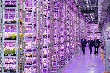 В Москве открыли уникальный вертикальный тепличный комплекс
