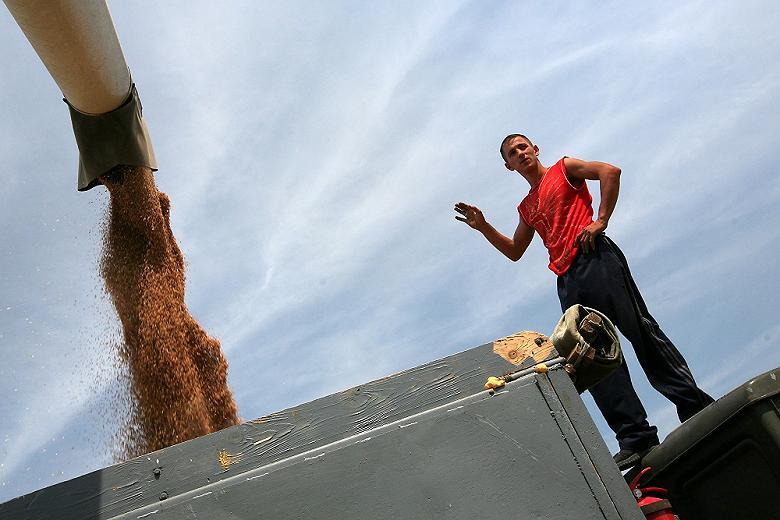 Урожай зерна в России перевалил за 100 миллионов тонн