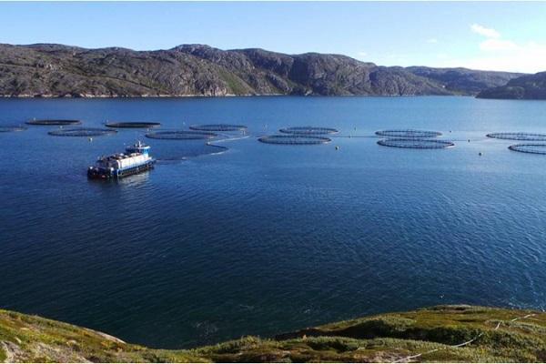 Свердловская область восстановит популяции нескольких видов лососевых