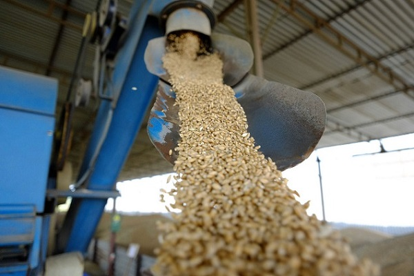 Закрытие трех зерновых площадок в ЮФО не повлияет на экспорт