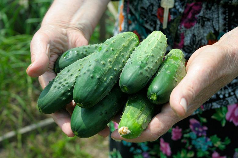 Из-за холодной весны урожай овощей в РФ задержится на 2 недели