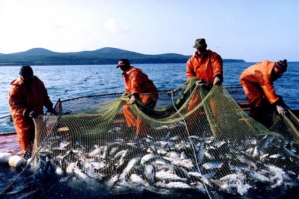 Впервые за 30 лет изучен запасы рыбы в части Охотского моря