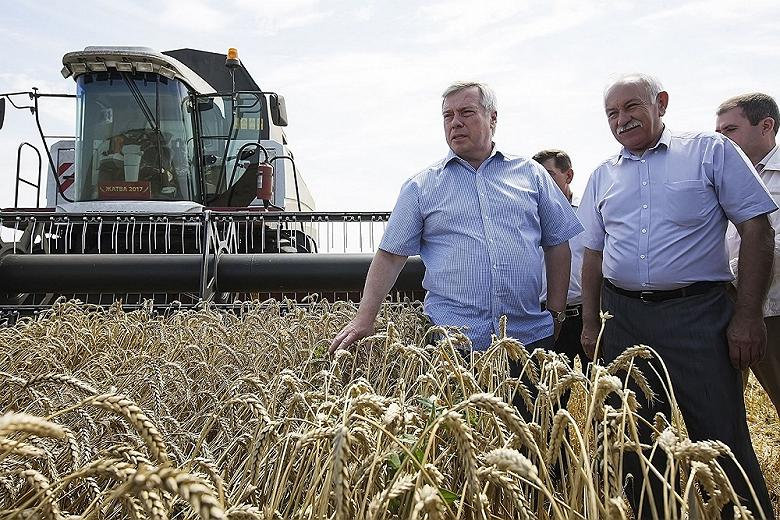 На Дону началась уборка ранних зерновых