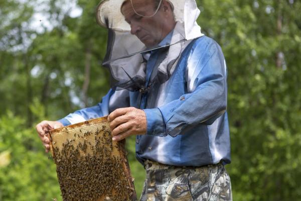 В Адыгее заработал Национальный союз пчеловодов