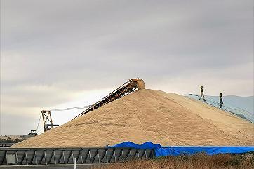 Топ-20 компаний экспортируют 76 процентов российского зерна