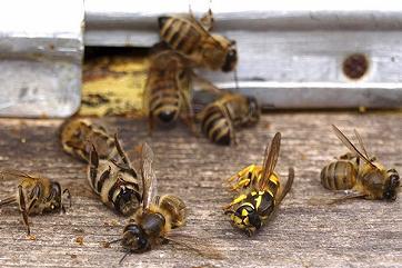 В Австрии садовод сел в тюрьму за убийство пчел