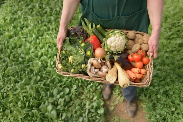 За пять лет в Европе на четверть выросла площадь органических земель