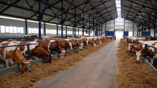 В Новгородской области в молочное производство инвестируют 2 млрд