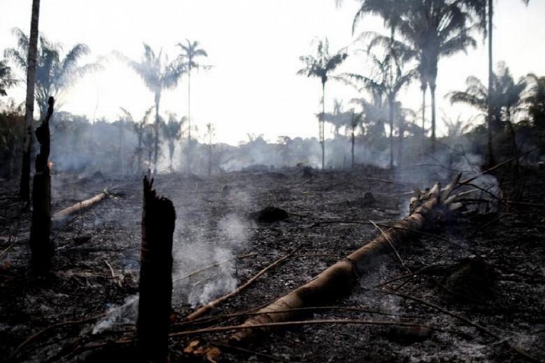 ДиКаприо собрал миллион долларов на спасение Амазонки через Instagram
