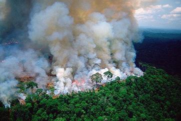 Катастрофа Амазонки: «легкие» планеты горят по заказу Китая
