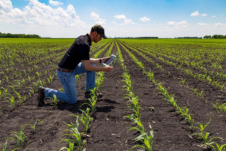 Минсельхоз запланировал застраховать 30 процентов посевов