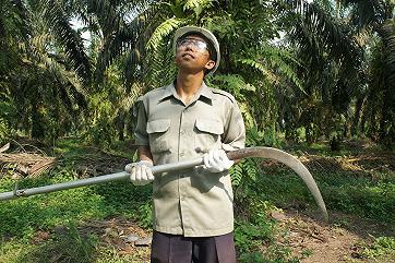 США будут бороться с вырубкой пальм