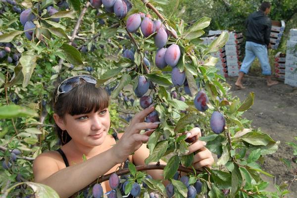 Кабардино-Балкария стала лидером по закладке садов в России