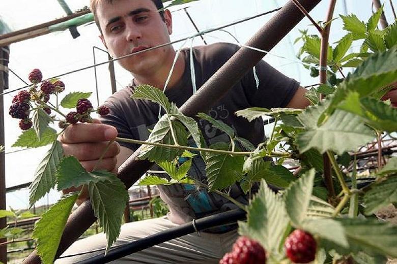Выбраны регионы для создания научных центров сельского хозяйства