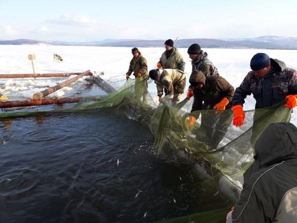 Добычу рыбы в Арктике реально увеличить на 100 тысяч тонн