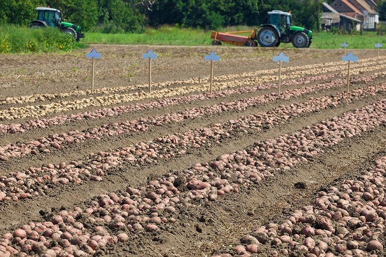Польша начала импортировать российский картофель и лук
