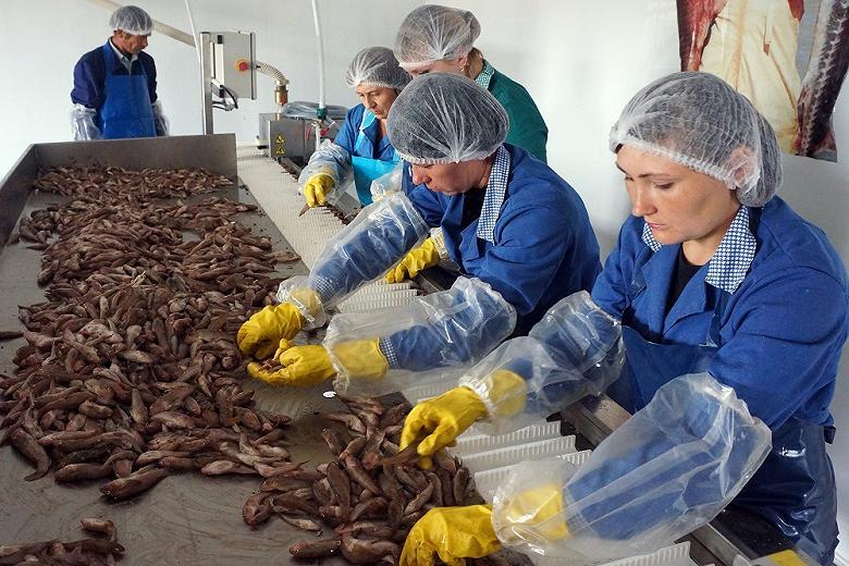 На Дальнем Востоке готовятся новые проекты по переработке рыбы